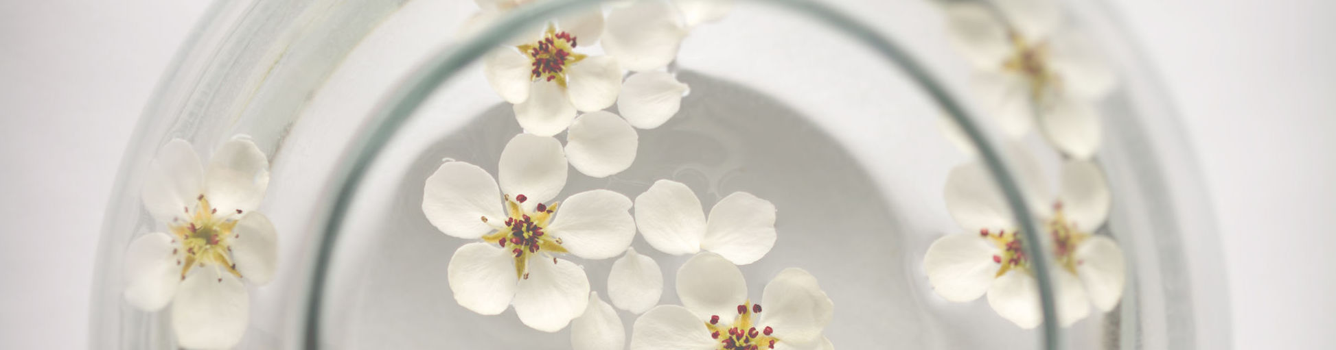 White blossoms floating with ease on water